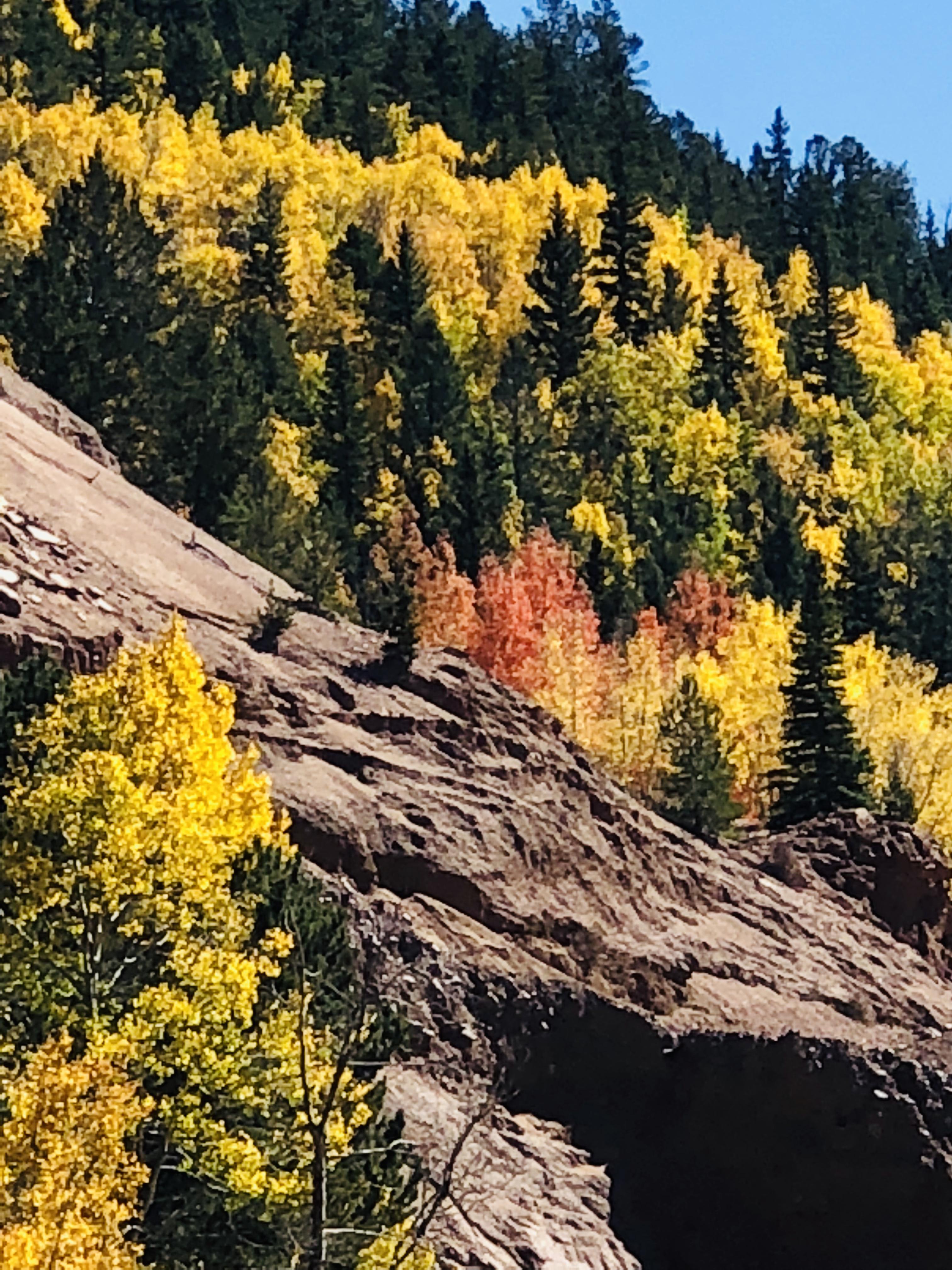 Autumn Colors Near Cripple Creek Colorado