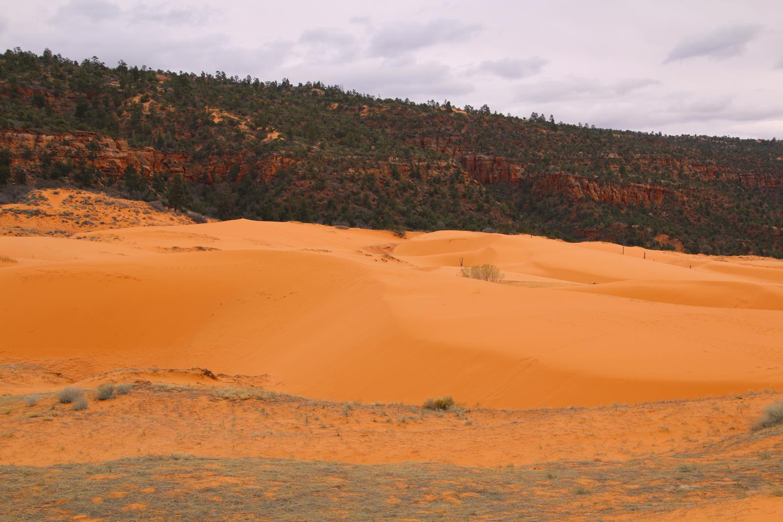 Coral Pink Sand Dunes State Park