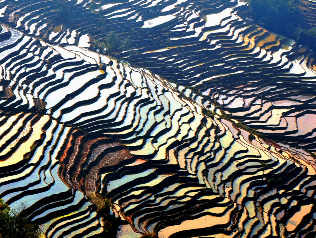 Living and Learning about the Rice Terraces in Yunnan China photo by Danette Ulrich