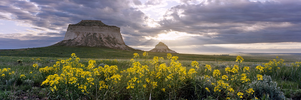 Pawnee Buttes and Wildflowers in Northeast Colorado