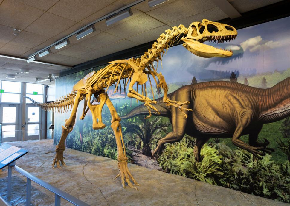 allosaurus at Dinosaur national Monument