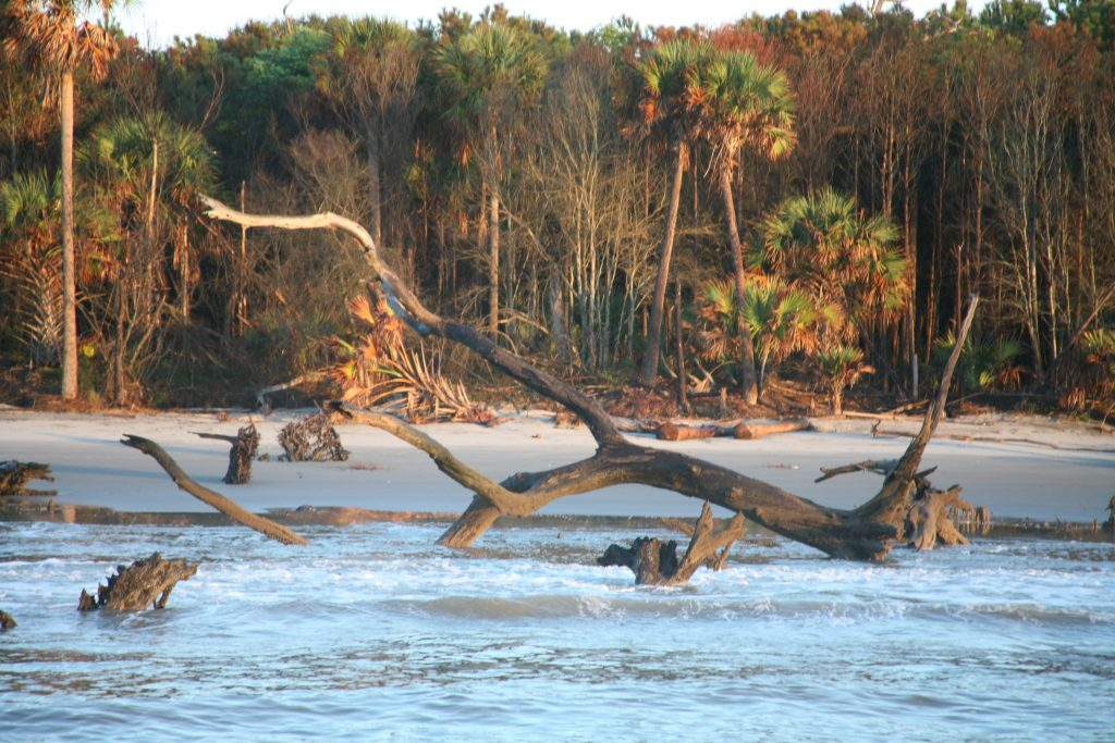 The Boneyard Beach on Capers Island South Carolina