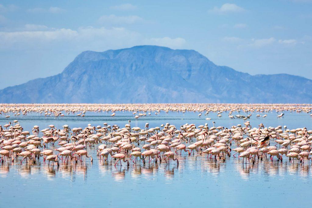 Lake Natron in Tanzania colors in Nature